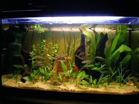 plante pour aquarium d eau froide mod 232 le aquarium eau froide