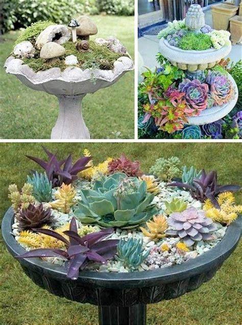 ideas for sedum gardens in bird baths pictures photos