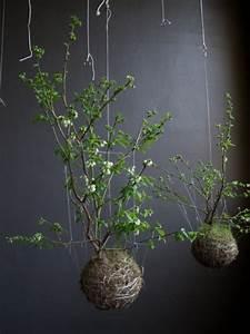 Deko Vögel Zum Aufhängen : deko mit bonsai pflanzen moosb lle zum aufh ngen selber machen ~ Orissabook.com Haus und Dekorationen