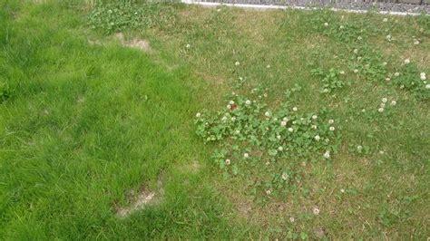 Was Hilft Gegen Klee Im Rasen 5601 by Was Hilft Gegen Klee Im Rasen Klee Im Rasen Entfernen Was
