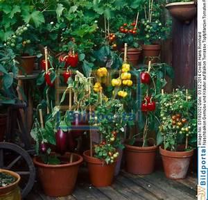 Gemüse Auf Dem Balkon : details zu 0003180202 naschbalkon gem se und kr uter ~ Lizthompson.info Haus und Dekorationen