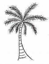Palm Coloring Pages Date sketch template