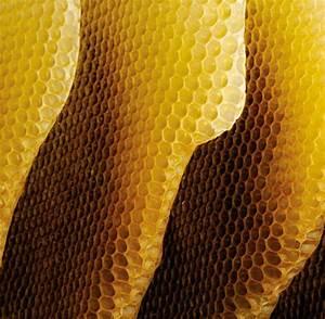 Wie Machen Bienen Honig : sirup statt honig ersatz zucker beeinflusst genaktivit t von bienen welt ~ Whattoseeinmadrid.com Haus und Dekorationen