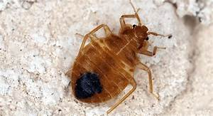 why bed bugs love south portland in the summer With bed bugs portland oregon