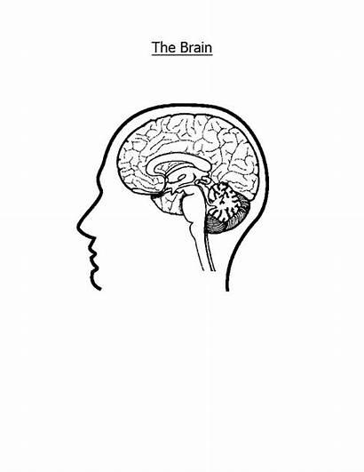 Brain Coloring Pages Nervous System Printable Superflex