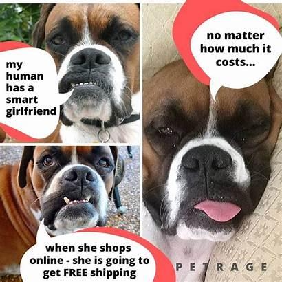 Dog Meme Boxer Sarcastic Petrage She