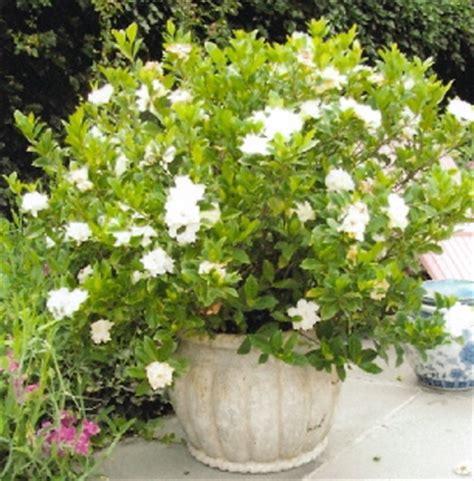 pot mover s new back saving gardening tool