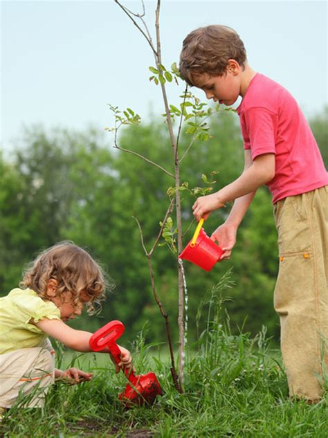 planter un arbre en pot planter un arbre momes net