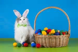 cat egg cat in rabbit suit with eggs animals photos