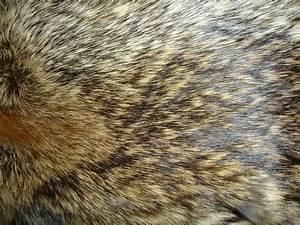 Fur Texture 22 by Fox-N-Wolf on DeviantArt