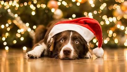 Christmas Dogs Animal Wallpapers Dog Desktop Wallpapersafari