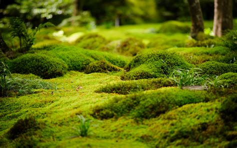 jeffrey friedls blog    gioji temple lotsa moss  bamboo