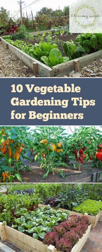 10 Vegetable Gardening Hacks Beginners Need To Know