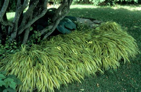 ideas for kitchen designs ornamental grasses design plans great garden with