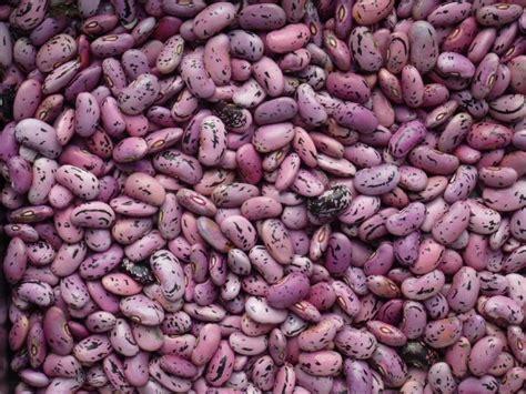 recette de cuisine été graines de haricots d 39 espagne
