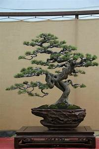 Bonsai Baum Arten : pin bonsai baum on pinterest ~ Michelbontemps.com Haus und Dekorationen