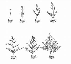 Important Growth And Development Stages Of Leatherleaf
