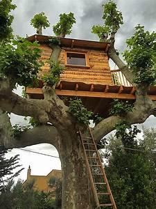 Cabane Dans Les Arbres Salon De Provence