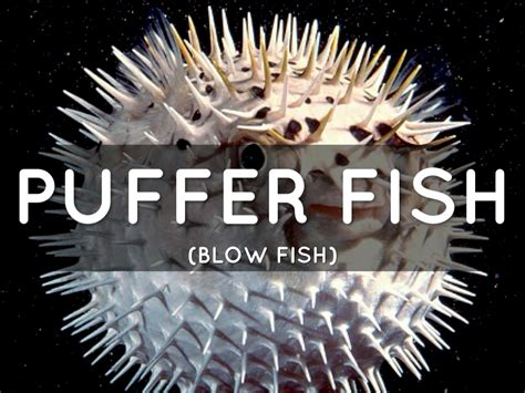 Puffer Fish By Roman Lewis