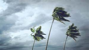 Palm Trees On Wind - YouTube