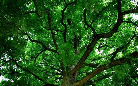 desktop backgrounds trees  images