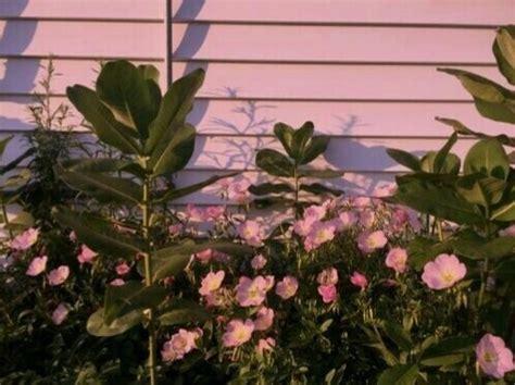 pink flowers  tumblr