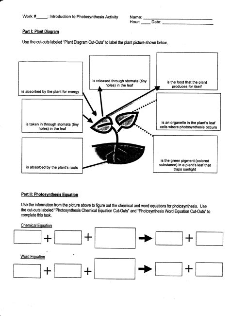 Photosynthesis And Respiration Worksheet - Tecnologialinstante