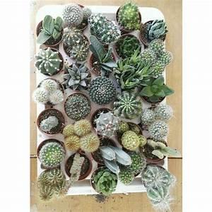 30 Piante Grasse -vaso 5 5cm- Piante Grasse Succulenti