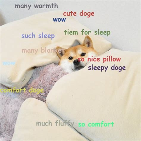 cute doge meme  ready  fluffy sleep