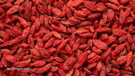 why are goji berries a superfood