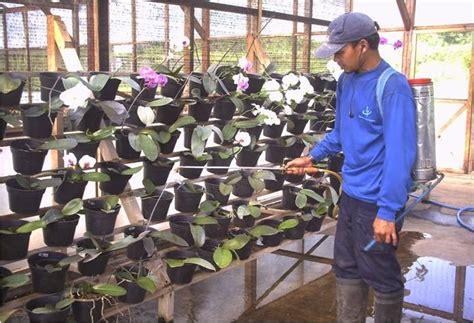 merawat tanaman anggrek pot ragam tanaman