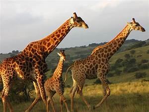Blitz Reisen Südafrika : familienreisen s dafrika auf safari mit for family reisen ~ Kayakingforconservation.com Haus und Dekorationen