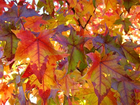7 Best Images Of Colorful Autumn Leaves Printable