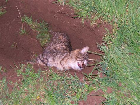 Dead Cat Quotes Quotesgram