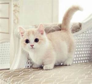 Adorable Short-Legs Of Munchkin Cat – Funny Cute Dog and ...