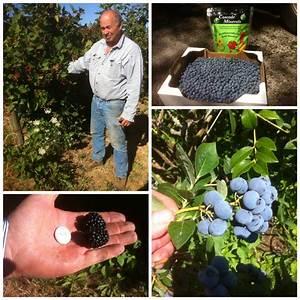 Healthy Soils | Sunset Valley Organics & Cascade Minerals