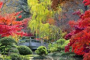 Japanischer Ahorn Standort Sonne : japanischer ahorn das sollten sie als g rtner ber den exoten wissen ebay ~ Eleganceandgraceweddings.com Haus und Dekorationen