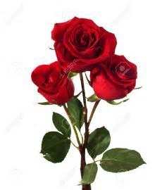 stem roses signification de 3 roses rouges photo de fleur une