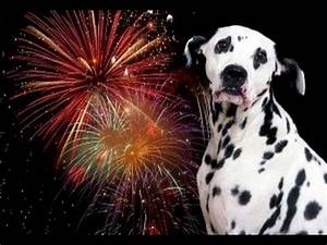 Dogs VS Fireworks - Fourth Of July Compilation - YouTube