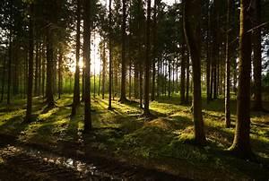Bilder Vom Wald : im wald von reinhold namenek galerie heise foto ~ Yasmunasinghe.com Haus und Dekorationen