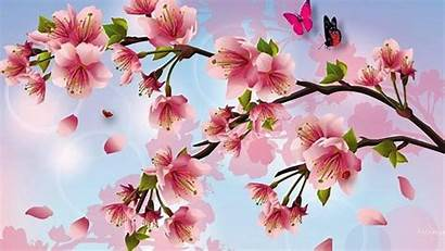 Cherry Blossoms Blossom Desktop Painting Butterflies Background