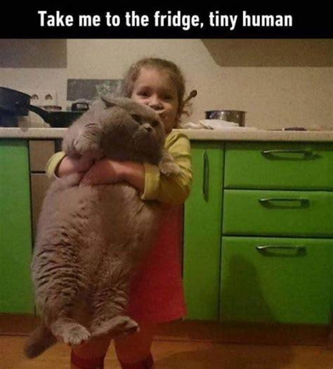 Take Me To The Fridge Tiny Human Cat Meme Laugh Out
