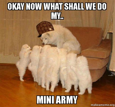 Now What Meme - okay now what shall we do my mini army scumbag storytelling dog make a meme