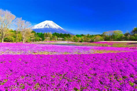 芝桜 山梨 に対する画像結果