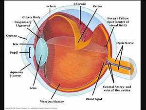 What Are The Three Layers Of The Human Eye