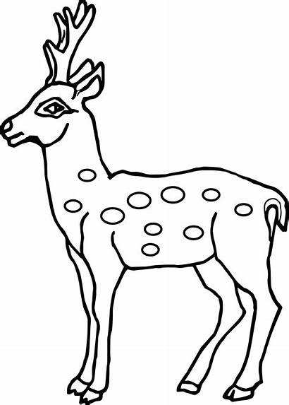 Deer Coloring Outline Drawing Pages Spotted Head