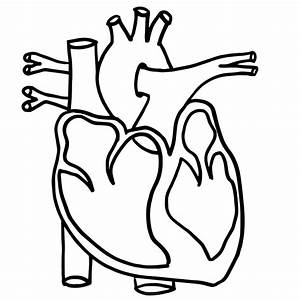 Free Heart Worksheets