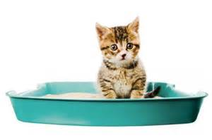 how to a cat to use a litter box cat years in human years chart pets guide