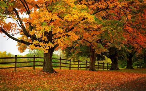 Autumn Trees Forest Park 4k Ultra Hd Wallpaper  Hd Wallpapers