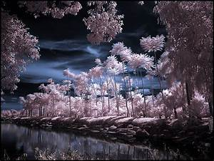 U0026gt   Infrared Photography